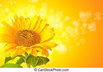 girasol, flor, detalle, con, resumen, brillante, plano de...