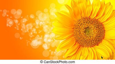 girasol, flor, resumen, detalle, plano de fondo, brillante