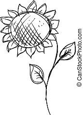 girasol, ilustración, dibujo, fondo., vector, blanco