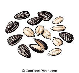 girasol, pelado, aislado, semillas, plano de fondo, blanco, entero