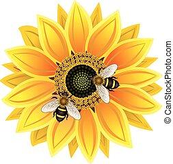 girasol, y, abeja