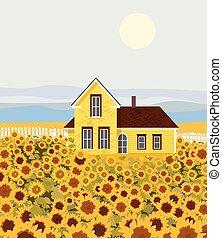 girasole, campagna, fronte, crescente, casa