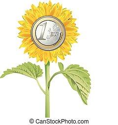 girasole, con, euro, moneta