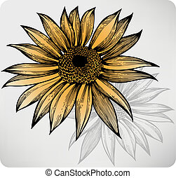 girasole, hand-drawing., vettore, illustration.