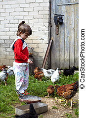 girl, alimentation, poulets