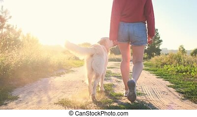 Girl legs and golden retriever stepping field road at sunset, rear view