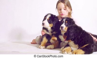 Girl and three puppies of a bernese shepherd dog