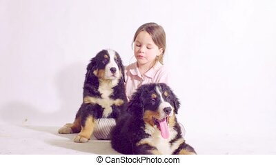 Girl and two puppies of a bernese shepherd dog