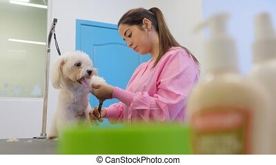 Girl At Work In Pet Store And Grooming Dog