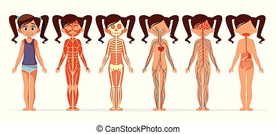 Girl body anatomy vector cartoon illustration of female muscular, skeletal, circulatory or nervous and digestive system