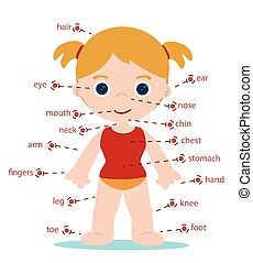 girl body parts chart for school
