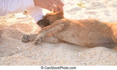 Girl caressing a puppy on sandy beach in summer