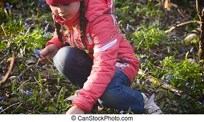 Girl collects blue snowdrops in the meadow