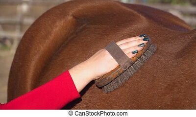 Girl combing horse comb. Slow motion. Close up - Girl...