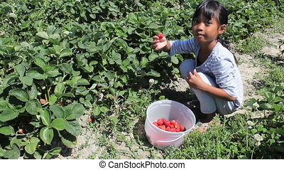 Girl Eats Freshly Picked Strawberry - A cute little seven...