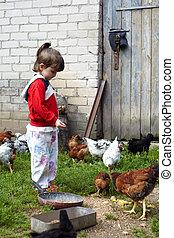 Girl feeding chickens in Lithuanian farm