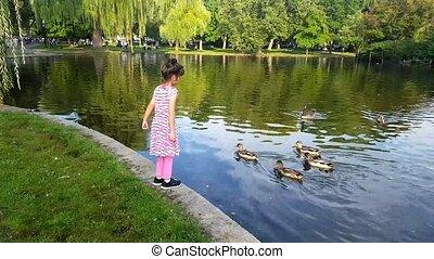 Girl feeding ducks in the park. Girl play outdoors. Kid...