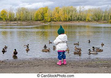 Girl feeding ducks on a river bank