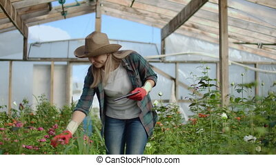 girl, fleuriste, tablette, roses, récolte, par,...