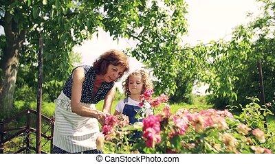 girl, grand-mère, jardinage, arrière-cour, personne agee,...