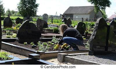 girl grave plant flower - girl plant begonia flowers on...