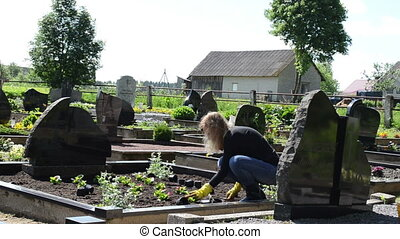 girl grave plant flower - girlfriend plant begonia flowers...