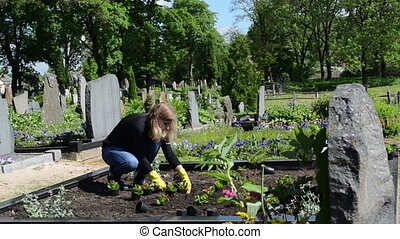 girl grave plant flower - woman plant begonia flowers on...
