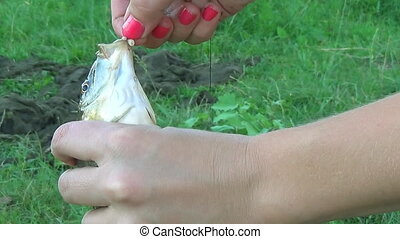 Girl hands hold Carp on the hook