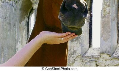 Girl having fun with horse
