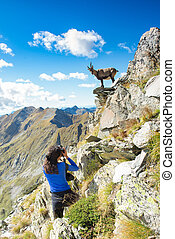 Girl hiker photographer ibex in the mountains