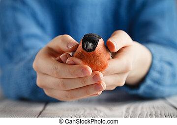 Girl hold bullfinch bird in hands