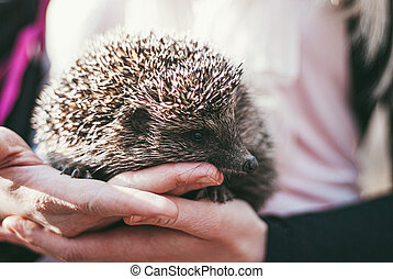 Girl holding a cute forest hedgehog in her hands. He put his...
