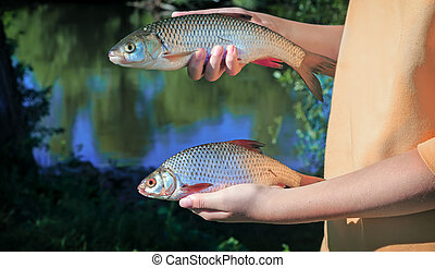 Girl holding a fish caught in the river.