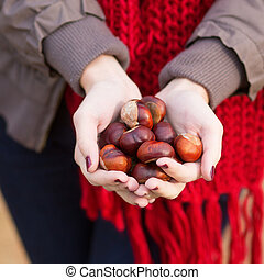 Girl holding many chestnuts in her hands