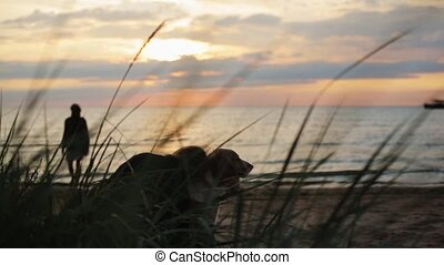 Girl hug dog on sand beach. Silhouette of man playing frisbee. Summer evening.
