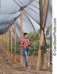 Girl in apple orchard - Young woman agronomist standing...