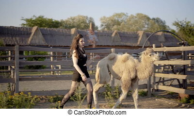 Girl interacts with a camel