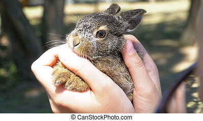Girl is Holding a Small Wild Fluffy Baby Bunny. Little bunny in the palm of your hand. Close-up. Slow motion in 96 fps. The girl gently strokes the animal over the wool. Friendly relations between people and animals