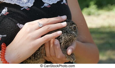 Girl is holding a small wild hare in her hands - The girl is...