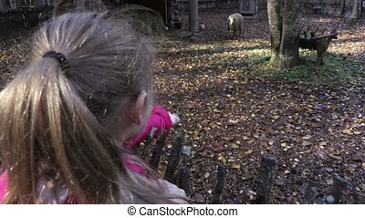 Girl is trying to feed sheep