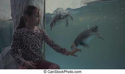 girl look through glass in oceanarium at swimming penguins.