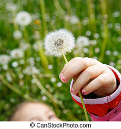 Girl lying in grass, surrounded by dandelion - Dandelion...