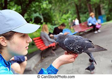 girl, nourrit, parc, pigeons