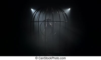 Girl on a scene in a cage performs on a hoop in a bird costume. Black background. Silhouette