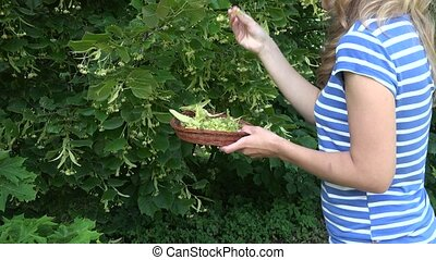 girl pick linden herbs to wicker dish. 4K