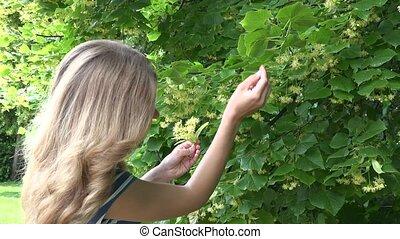 girl pick yellow linden hand at summer. Seasonal herb picking