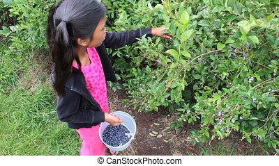Girl Picking Fresh Blueberries