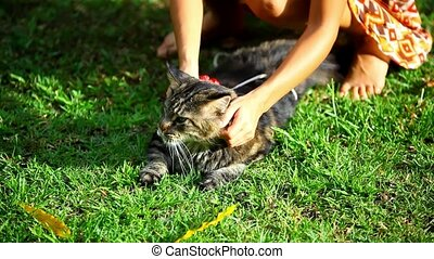 Girl playing with a cat in nature. Footage