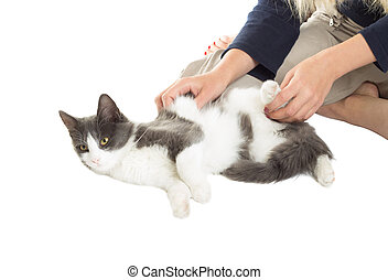 girl playing with a cat on a white background isolated
