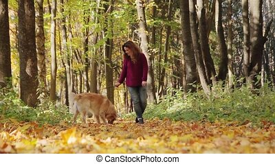 Girl playing with golden retriever dog in the park. Girl throwing stick to a dog.